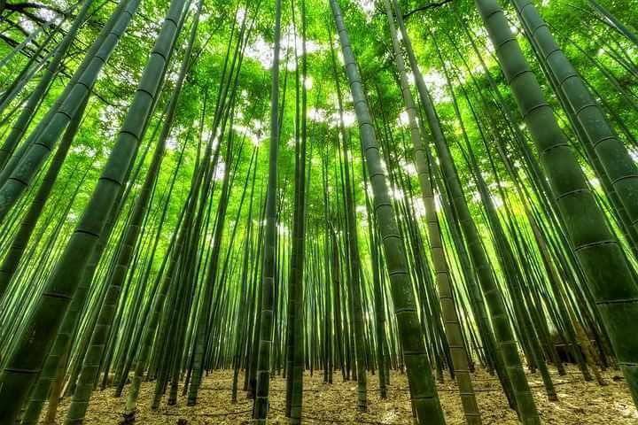 Inspirational story from bamboo and fern