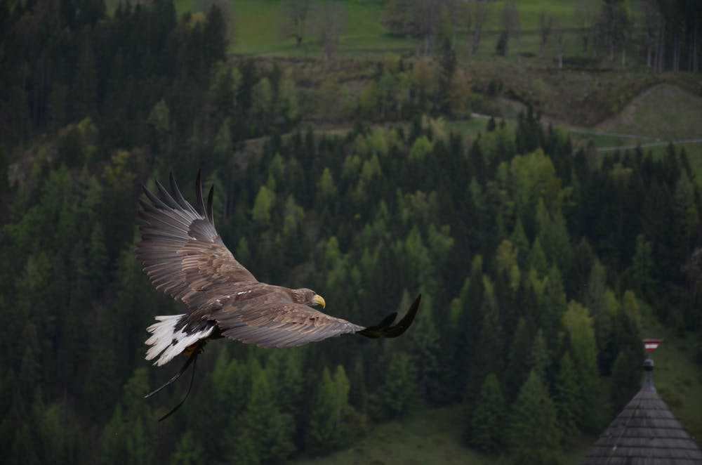 7 Things You Can Learn From The Eagle's Attitude.